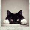 katen