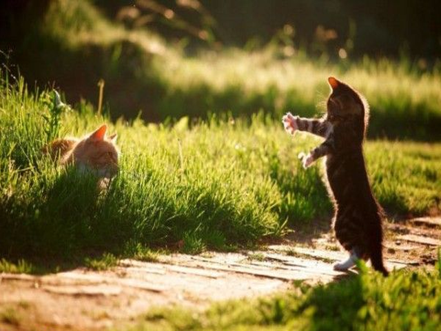 147_Funny_cats